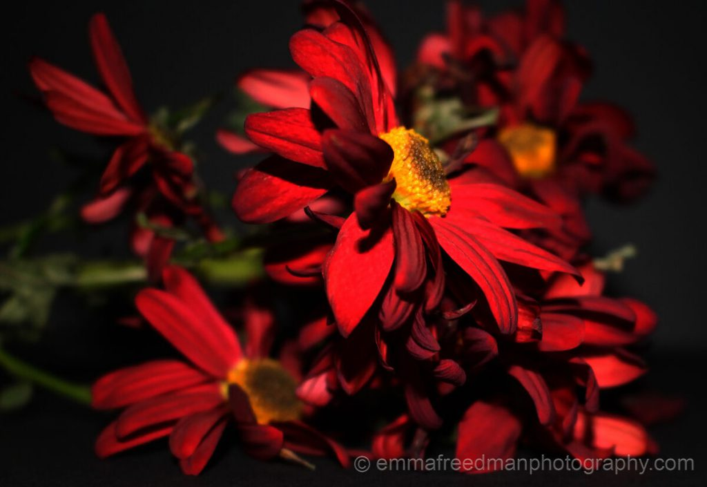 Alluring red flower